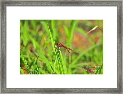 Resplendent Red Framed Print by Al Powell Photography USA