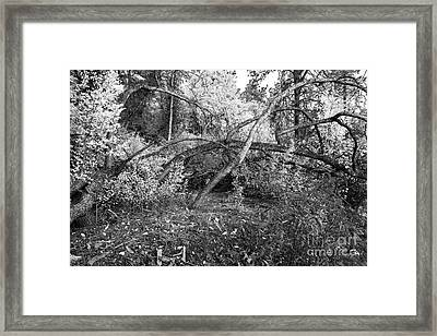 Framed Print featuring the photograph Tropical Shade by Roselynne Broussard