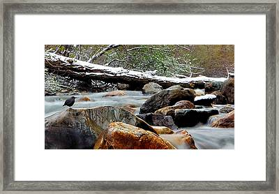Restful Nature Framed Print by Steven Milner