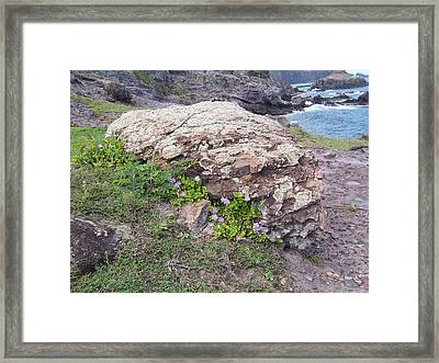 Framed Print featuring the photograph Restful Outlook by Sheila Byers