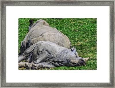 Restful Rhinoceros Framed Print