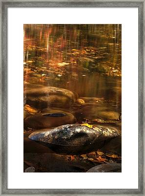Resting Leaf Framed Print by Andrew Soundarajan
