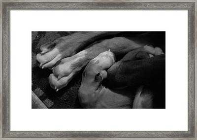 Resting Framed Print by Aaron Aldrich
