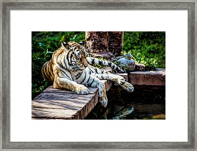 Resting Beauty Framed Print