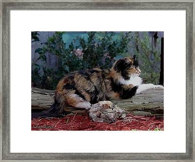 Resting Calico Cat Framed Print