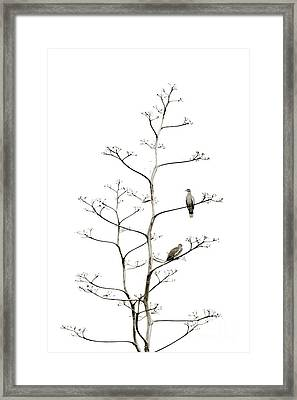 Resting Doves Framed Print