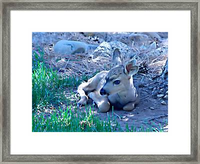 Resting Fawn Framed Print by Rebecca Adams