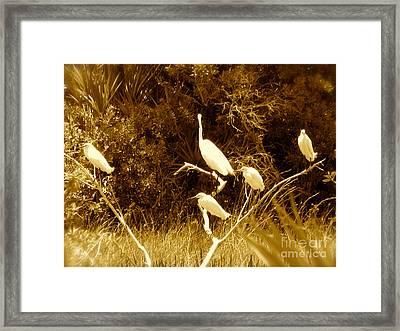 Resting Flock Sepia Framed Print