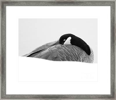 Resting Goose In Bw Framed Print