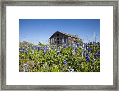 Resting In A Field Of Blue Framed Print