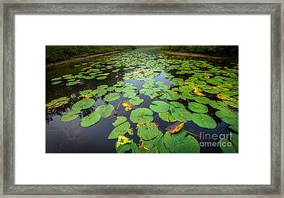 Resting Lilly Pads Framed Print by Andrew Slater