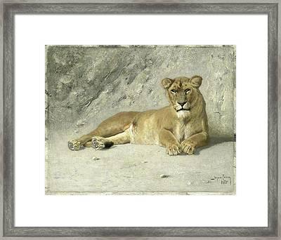 Resting Lioness, Jan Van Essen Framed Print