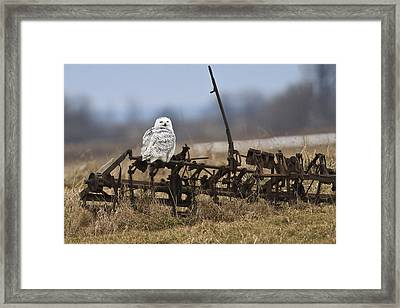 Framed Print featuring the photograph Resting Place by Gary Hall