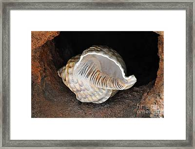 Framed Print featuring the photograph Resting Place by Gina Savage