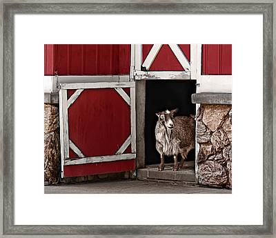 Resting Place Framed Print by Nikolyn McDonald
