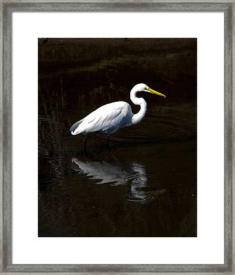 Resting Reflection Framed Print by Paula Porterfield-Izzo