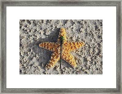 Resting Regal Framed Print by Al Powell Photography USA
