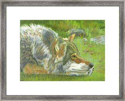 Resting Framed Print by Ruth Seal