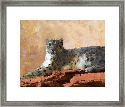 Resting Snow Leopard Framed Print by Roger D Hale