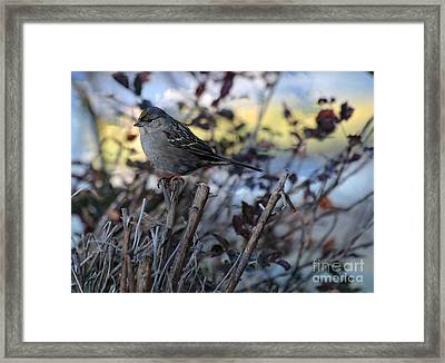 Framed Print featuring the photograph Resting Sparrow by Marjorie Imbeau