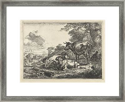 Resting Three Cows Framed Print by Quint Lox