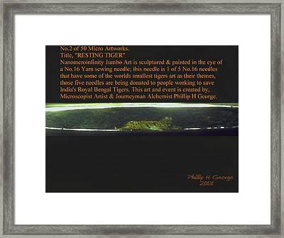 Resting Tiger  Framed Print by Phillip H George