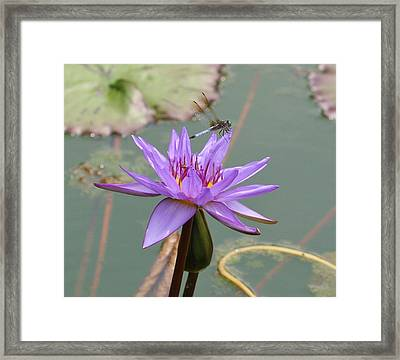 Resting Time Framed Print