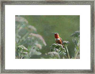 Resting With Nature Framed Print