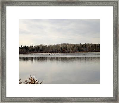 Framed Print featuring the photograph Restless by Rhonda McDougall
