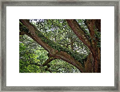 Framed Print featuring the photograph Resurrection Fern by Linda Brown