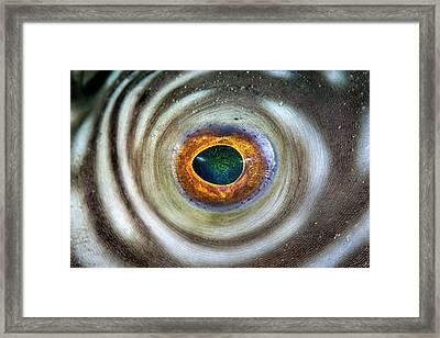 Reticulated Pufferfish Eye Framed Print by Ethan Daniels