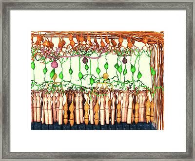 Retina Cell Layers Framed Print by Juan Gaertner
