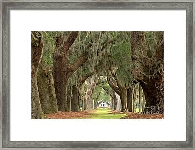 Retreat Avenue Of The Oaks Framed Print by Adam Jewell