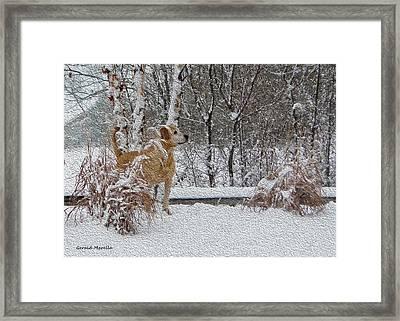 Retriever And Fresh Snowfall Framed Print