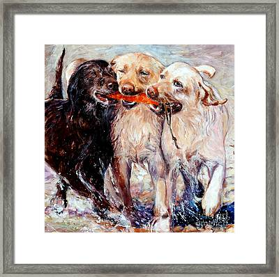Retrieving Fools Framed Print by Molly Poole