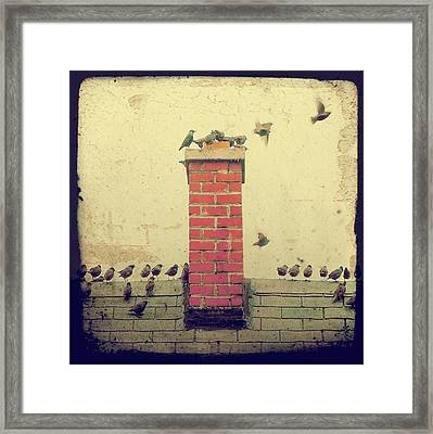 Retro Birds Framed Print by Gothicolors Donna Snyder