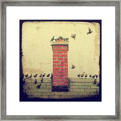 Retro Birds Framed Print