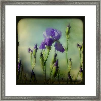 Retro Iris Metting Framed Print