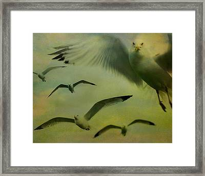 Retro Seagulls Framed Print