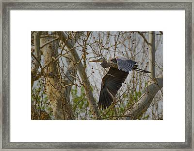 Return Flight Framed Print