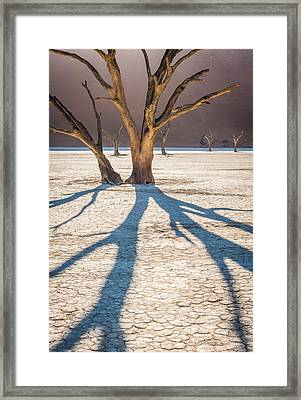 Return Of The Shadow Of The Camel Thorn - Dead Vlei Photograph Framed Print