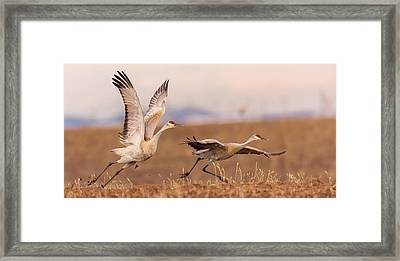 Return To Yampa Valley Framed Print