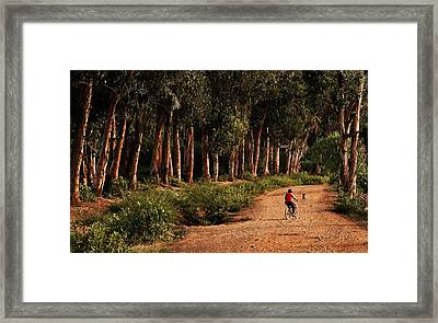 Returning Home Framed Print by Mary Jo Allen