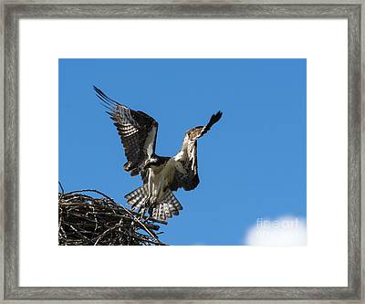 Returning To The Nest Framed Print by Mike Dawson