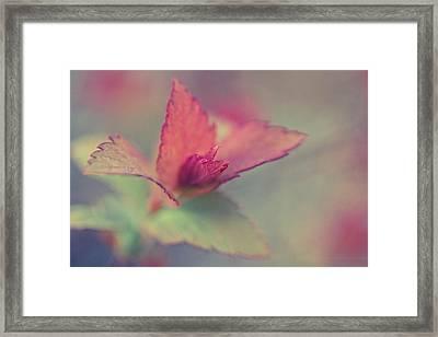 Reveal Framed Print