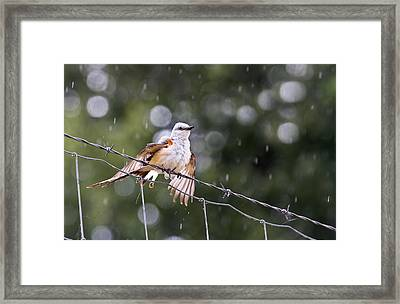 Revelling In The Rain Framed Print