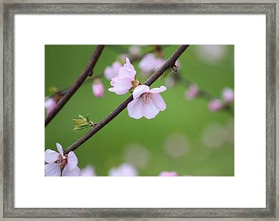 Framed Print featuring the photograph Reverie by The Art Of Marilyn Ridoutt-Greene
