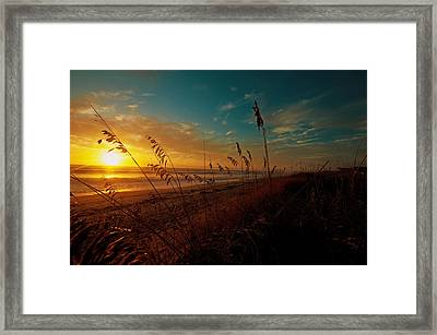 Framed Print featuring the photograph Revival  by John Harding