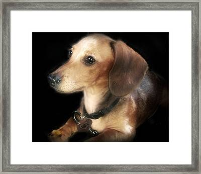 REX Framed Print by Donna Brown