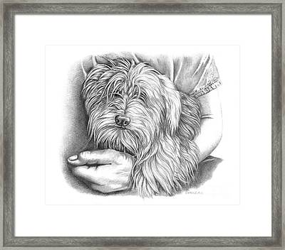 Rexie Framed Print by Catherine Garneau
